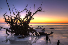 Árvores no hdr da água Imagens de Stock Royalty Free
