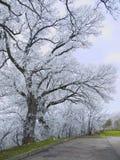 Árvores no hoarfrost fotos de stock royalty free