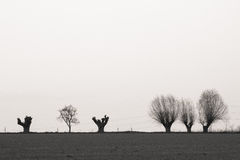 Árvores no horizont Imagens de Stock