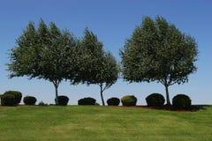 Árvores no horizonte Imagens de Stock Royalty Free
