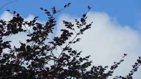 Árvores no horizonte Imagens de Stock