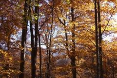 Árvores no incêndio fotografia de stock royalty free