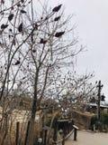 Árvores no inverno Fotos de Stock