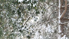 Árvores no inverno video estoque