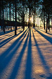 Árvores no inverno 2 Foto de Stock Royalty Free