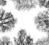 Árvores no inverno foto de stock