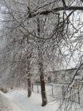Árvores no inverno Imagem de Stock