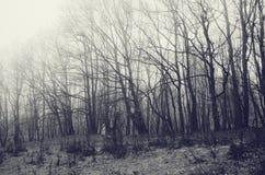 Árvores no inverno com geada na terra Imagem de Stock Royalty Free