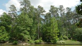 Árvores no jardim Fotografia de Stock Royalty Free