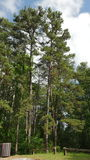 Árvores no jardim Fotos de Stock