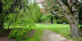 Árvores no jardim botânico Imagens de Stock Royalty Free