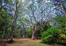 Árvores no jardim botânico Imagens de Stock