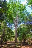 Árvores no jardim botânico Foto de Stock Royalty Free