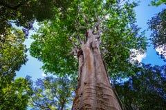 Árvores no jardim botânico Fotografia de Stock Royalty Free