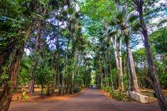 Árvores no jardim botânico Foto de Stock
