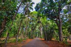 Árvores no jardim botânico Fotos de Stock