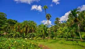 Árvores no jardim botânico Fotografia de Stock