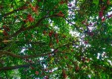 Árvores no jardim botânico Imagem de Stock Royalty Free