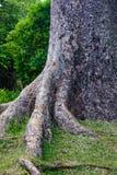 Árvores no jardim botânico Fotos de Stock Royalty Free