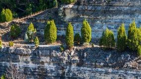 Árvores no lado da estrada decorada, em Austin Texas fotografia de stock royalty free