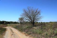 Árvores no lado de uma estrada só do cascalho Fotografia de Stock