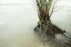 Árvores no lago durante uma tempestade foto de stock
