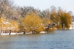Árvores no lago no inverno Fotos de Stock Royalty Free