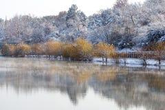 Árvores no lago no inverno Fotos de Stock