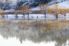 Árvores no lago no inverno Foto de Stock Royalty Free