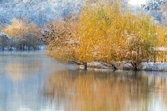 Árvores no lago no inverno Fotografia de Stock