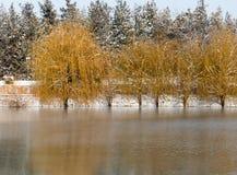 Árvores no lago no inverno Imagens de Stock