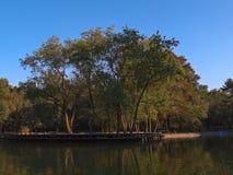 Árvores no lago no parque de Chapultepec, Cidade do México, México Foto de Stock Royalty Free