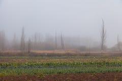 Árvores no meio na névoa Fotografia de Stock