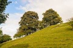 Árvores no monte íngreme Foto de Stock Royalty Free