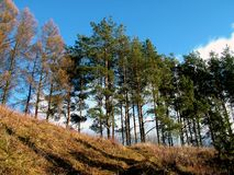 Árvores no monte Foto de Stock