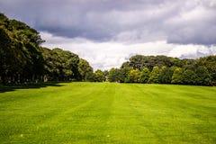 Árvores no monte Imagem de Stock Royalty Free