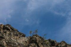 Árvores no montes rochosos Imagens de Stock