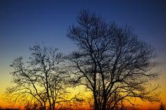Árvores no nascer do sol Fotografia de Stock Royalty Free