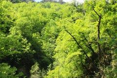 Árvores no ordesa, pyrenees Fotografia de Stock Royalty Free