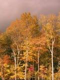 Árvores no outono Fotografia de Stock Royalty Free