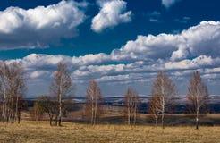 Árvores no outono e nas nuvens imagem de stock