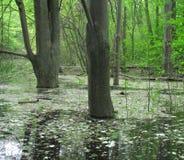 Árvores no pântano Imagem de Stock Royalty Free