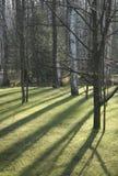 Árvores no parque Fotos de Stock Royalty Free