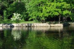 Árvores no parque Imagens de Stock Royalty Free