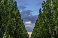 Árvores no parque Imagens de Stock