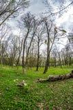 ?rvores no parque atrav?s da lente do peixe-olho fotografia de stock royalty free