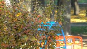 Árvores no parque da cidade do outono video estoque