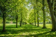 Árvores no parque de Marbury Fotografia de Stock Royalty Free
