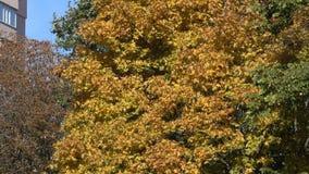 Árvores no parque do outono da cidade filme
