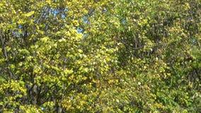 Árvores no parque do outono da cidade video estoque